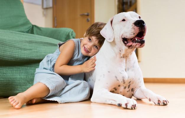 hund som kæledyr